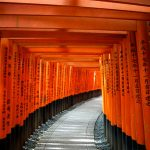 Torii gates—Fushimi Inari Shrine