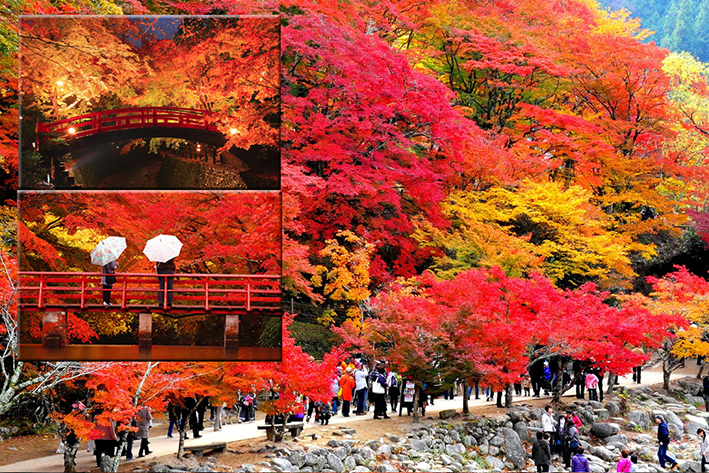 Image result for MUSIM GUGUR  jepang