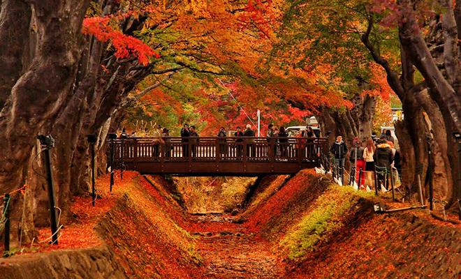 musim gugur3