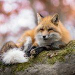 20141109_093615_foxinfonet