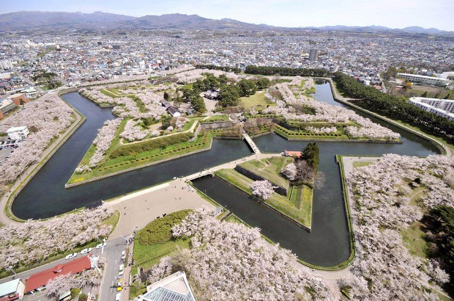goryokaku sakura