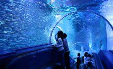 aquamuseum_zone3_2_main