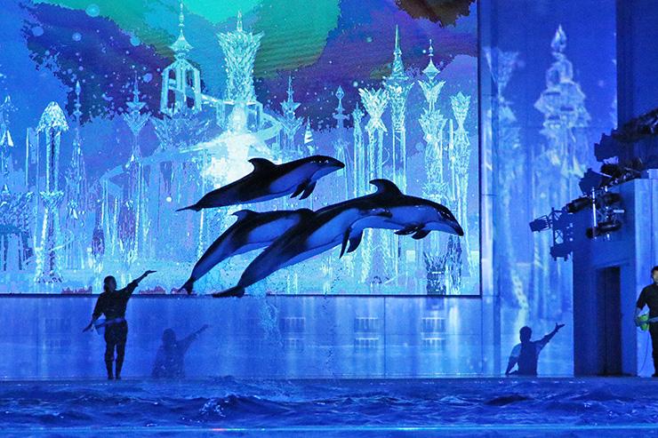Pertunjukan lumba-lumba dalam show The Color of Love