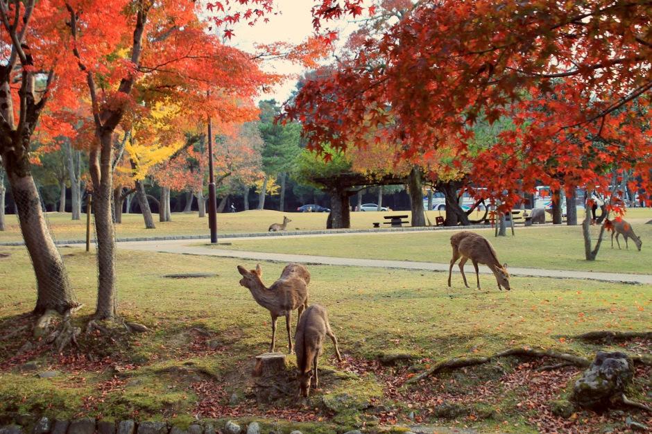 Nara Park, Nara Japan