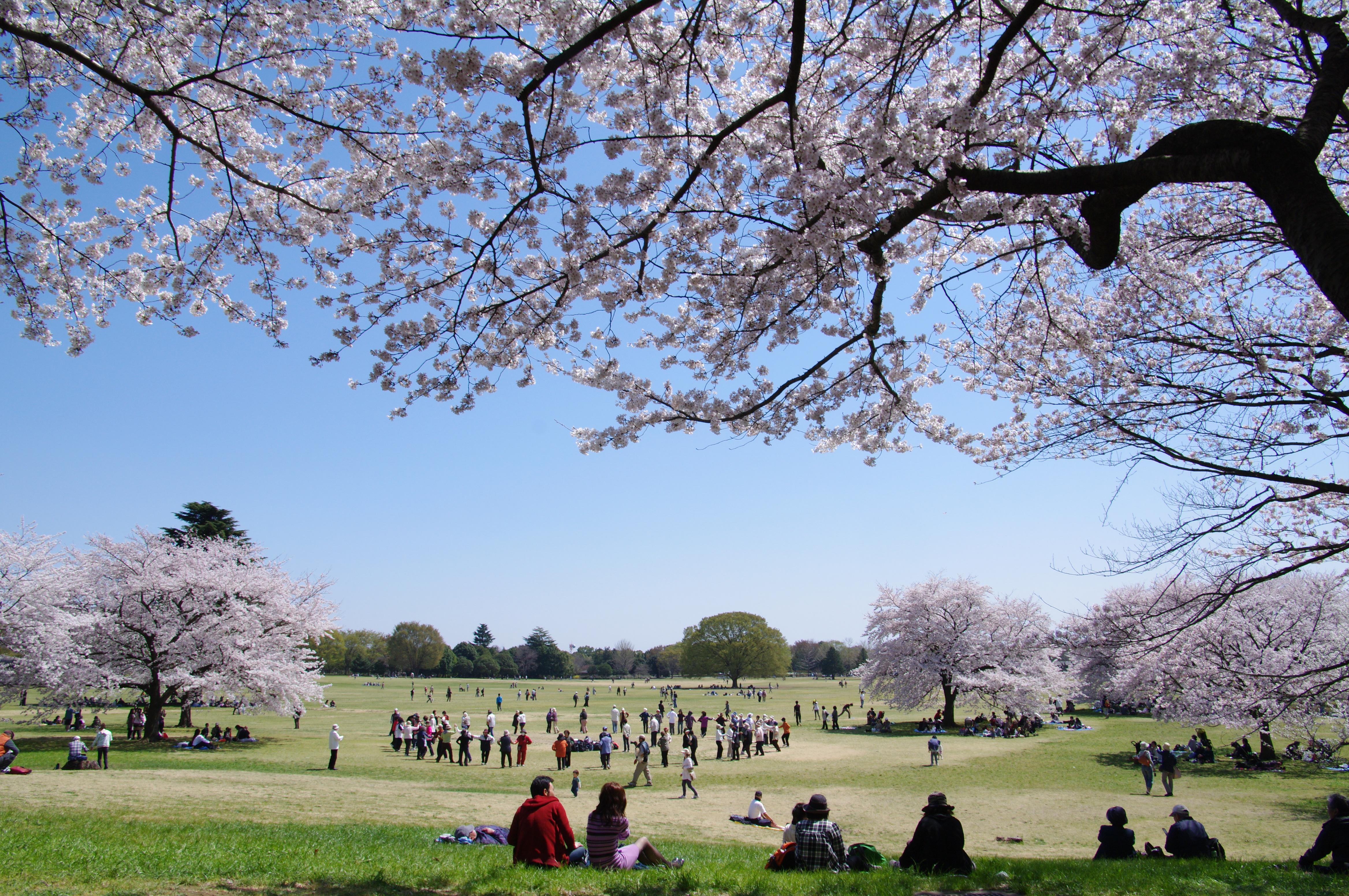 Showa Kinen Park, Tokyo Japan