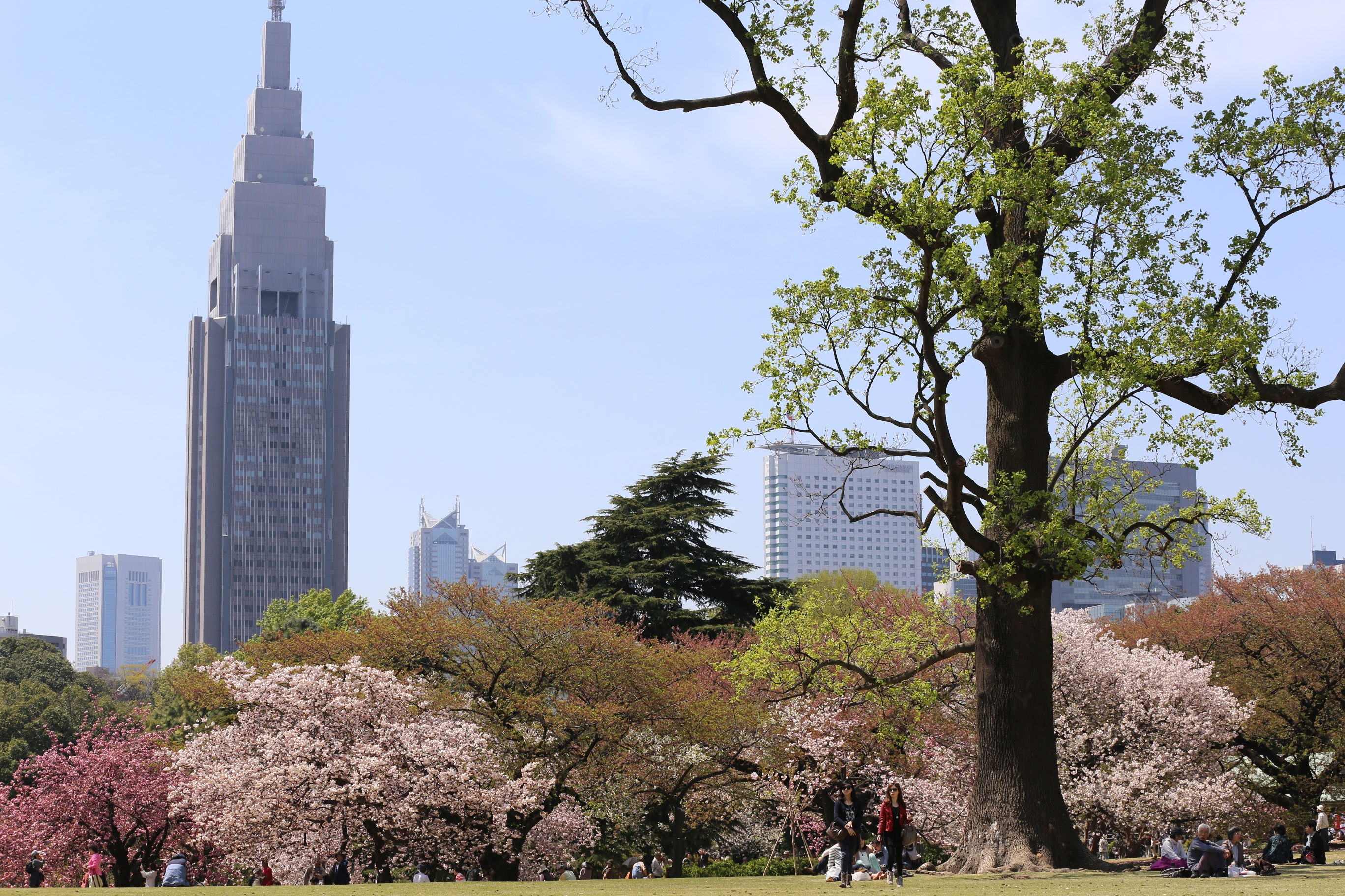 Shinjuku Goen National Park