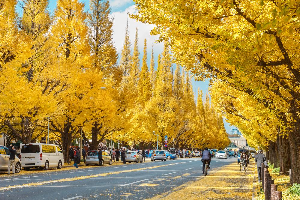 Suasana Musim Gugur Meiji Jingu, Tokyo, Japan