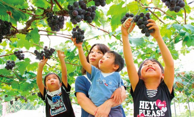 Fruit-Picking-Japan-1