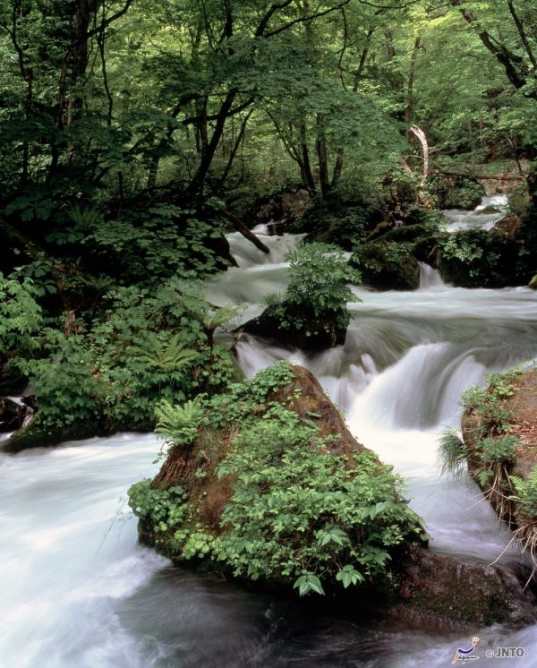 Oirase Gorge (Aomori)