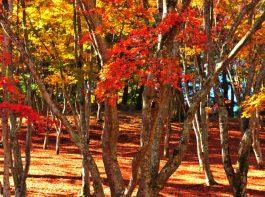 shuzenji autumn