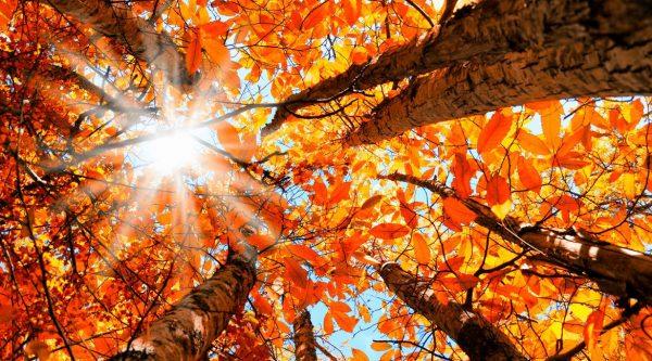 autumn+leaves
