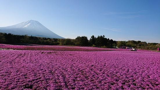source img: www.shibazakura.jp