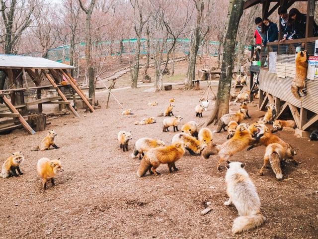 miyagi fox village