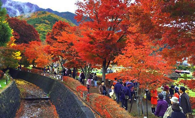 lake kawaguchi maplle