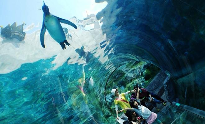 Asahiyama Zoo blog