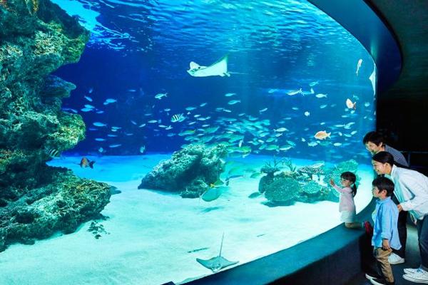 Sunshine Aquarium5