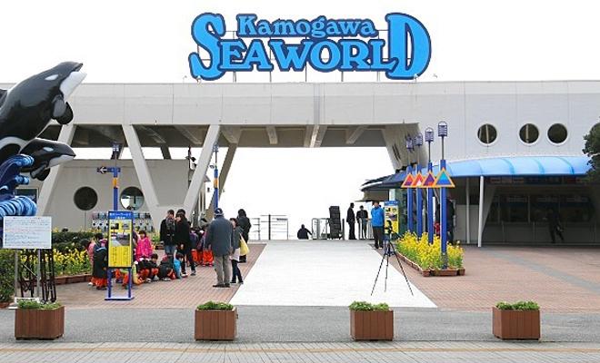 Kamogawa seaworld2