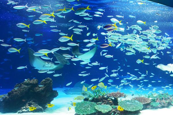 Sunshine Aquarium2