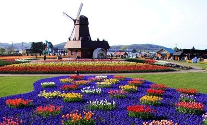 bunga tulip2